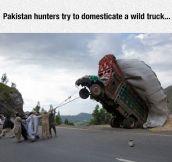 Wild Truck