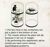 Experiment With Photosynthesis