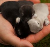 Just A Handful Of Baby Bunnies