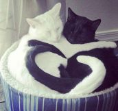 Yin-Yang Of Love