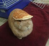 And Here's A Bunny With A Pancake On Its Head