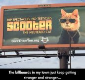 Vet Billboards