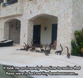 Not Tiny Brontosauruses