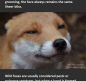 Foxes Are Just Misunderstood Creatures