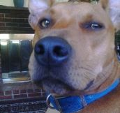 Real Life Scooby