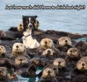 One Of These Guys Is Not Like The Otters