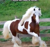I Can't Get Over How Fabulous This Horse Is