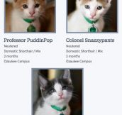 Really Good At Naming Cats