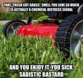 Fresh Cut Grass Smell