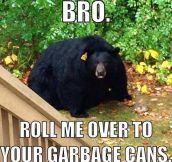 Overweight Black Bear