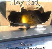 Psst Kid, I'm Right Here