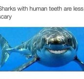 Shark Smiles