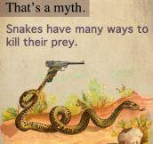 Dangerous Snakes