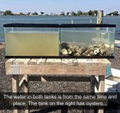 Oysters Are The Perfect Water Filters