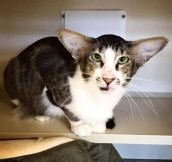 This Cat Looks Exactly Like Adam Driver (Kylo Ren)