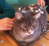 These 3D Puzzles Are So Lifelike