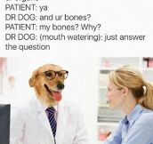 Doctor Dog Asking The Important Questions