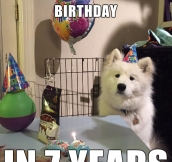 Dog's First Birthday