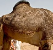Epic Camel Haircut