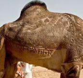 Epic Camel Haircut