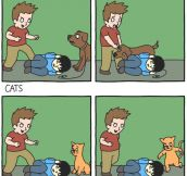 Why I Dislike Cats