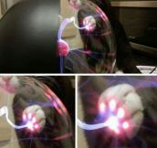 When A Cat Touches A Plasma Ball