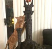 Hobbit Cat