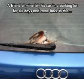 Chicks Love An Audi