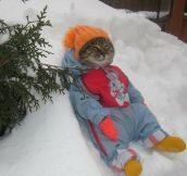 Cat Enjoying Winter
