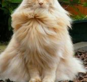 This Magnificent Cat Just Went Super Saiyan