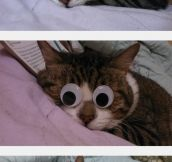 Googly Kitty