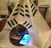 Spoiled Cat