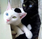 Brothers With Exceptional Eye Color