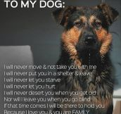 A Pledge To My Dog
