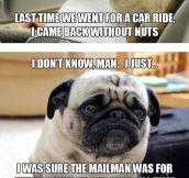 Introspective Pugs