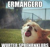 Dog Vs. Sprinklers
