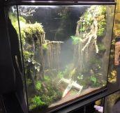 Dagobah System Themed Frog Terrarium