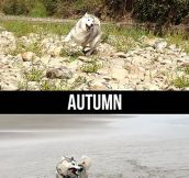 Husky During Different Seasons
