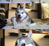 Pun Dog Never Gets Old