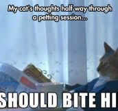 Feline Thoughts