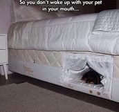 Bed With A Place For Your Dog