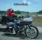 Helmet Win