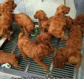 Kentucky Fried Dogs