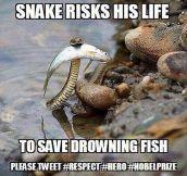 Hero Snake