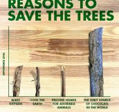 Some Reasons To Save The Trees