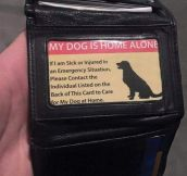 Some Dog Owners Are Prepared