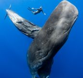 Swimming With Big Giants