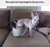 Ain't Big Enough