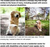 The Golden Retriever Born Without Eyes