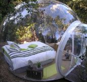 Would You Sleep In This Bubble Bed Surrounded By Nature?
